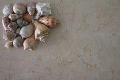 与海壳装饰的背景 免版税库存图片