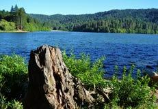 与海岸线绿叶和树干的湖边视图 免版税库存照片