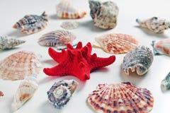 与海扇壳的红色海星在白色背景 图库摄影