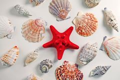 与海扇壳的红色海星在白色背景 免版税库存图片