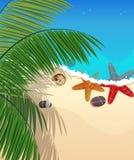 与海星和棕榈分支的海滩 免版税库存照片