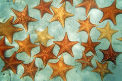 与海星的桑迪海底在加勒比海 免版税库存图片