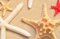 与海星的海滩沙子 图库摄影