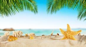 与海星的热带海滩在沙子,暑假背景 免版税库存图片
