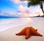与海星的艺术美好的风景在海滩 免版税库存照片