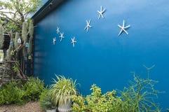 与海星的蓝色墙壁背景在庭院里 免版税库存照片