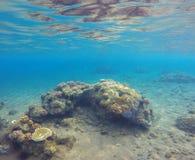与海沙底部和珊瑚礁的水下的风景 库存图片