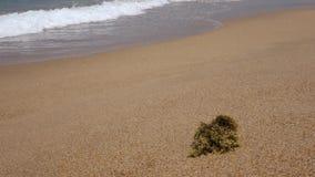 与海波浪的海滩 库存照片