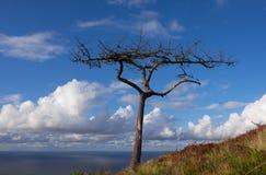 与海洋的充分树和天空云彩在背景中 免版税库存照片