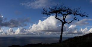 与海洋的充分树和天空云彩在背景中 免版税库存图片