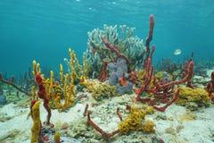 与海海绵的充满活力的水下的生活在海底 库存图片
