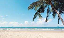 与海滩和晴朗的天空的可可椰子树 免版税库存图片