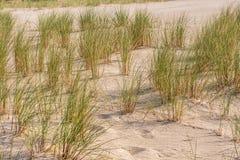 与海滩草的波罗的海海滩 免版税图库摄影