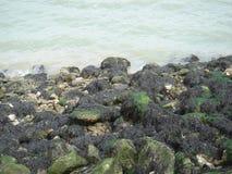 与海草的岩石 免版税库存图片
