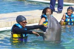 与海豚,开曼群岛的互作用 库存照片