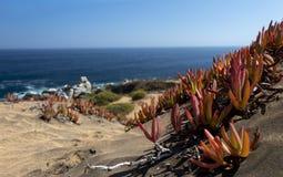 与海边植物群的沙丘Concon:沙丘草和红色冰厂在秋天 免版税库存图片