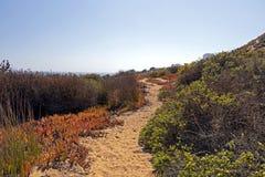 与海边植物群的沙丘Concon:沙丘草和红色冰厂在秋天 库存图片