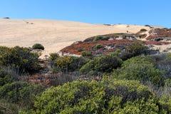 与海边植物群的沙丘Concon:沙丘草和红色冰厂在秋天 免版税图库摄影