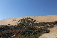 与海边植物群的沙丘Concon:沙丘草和芦荟在秋天 库存照片
