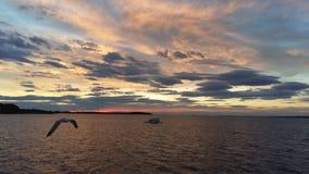 与海鸥使用的COLORFULL天空 图库摄影