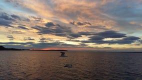 与海鸥使用的COLORFULL天空 免版税图库摄影