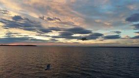 与海鸥使用的COLORFULL天空 库存图片
