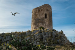 与海鸥的古老塔 库存照片