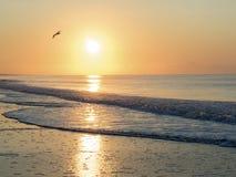 与海鸥的日出 免版税库存照片