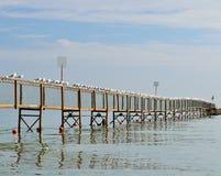 与海鸥的海景在码头 库存照片