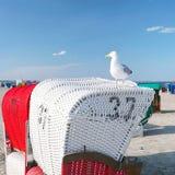 与海鸥的海滩睡椅 免版税库存图片