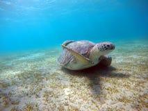与海龟的水下的风景在大海 库存图片