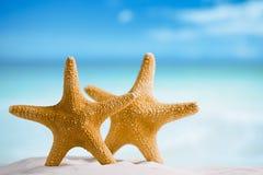 与海洋、海滩、天空和海景,浅dof的巨型海星 免版税库存照片