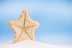 与海洋、海滩和海景的深水罕见的海星 免版税库存照片