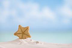 与海洋、海滩和海景的深水罕见的海星 图库摄影