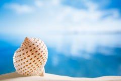 与海洋、海滩和海景,浅dof的好的贝壳 免版税库存照片