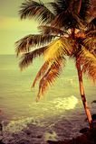 与海洋海滩和棕榈树的热带风景 免版税图库摄影