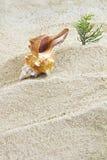 与海滩的壳 免版税库存图片