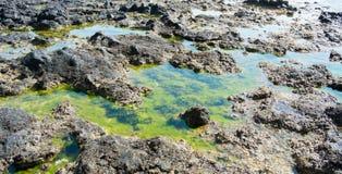 与海藻的多岩石的海滩 免版税库存照片