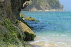 与海藻的峭壁海滩 免版税库存图片