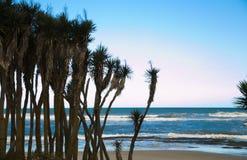 与海滩的棕榈树在背景中 免版税图库摄影