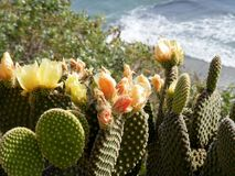 与海洋的橙色仙人掌花在背景中 库存照片