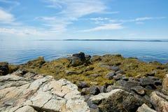 与海藻的海岸 库存照片