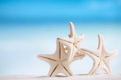 与海洋的白色海星,白色沙子海滩、天空和海景 免版税库存照片