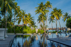 与海滩睡椅和棕榈树的惊人的美好的游泳池热带区域在马尔代夫 免版税库存照片