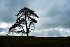 与消极空间的大典雅的树 库存照片