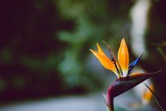 与消极空间的抽象异乎寻常的花照片 免版税图库摄影
