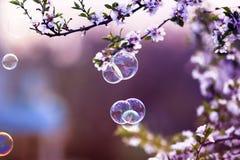 与淡光在阳光下在春天在樱花分支上的庭院的飞行的肥皂泡的欢乐背景 库存图片