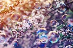 与淡光在阳光下在春天在樱花分支上的晴朗的庭院的飞行泡影的欢乐背景 免版税图库摄影