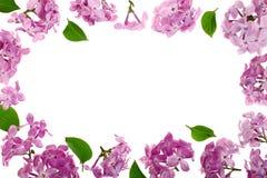 与淡紫色在与拷贝空间的白色背景隔绝的花和叶子的框架您的文本的 平的位置 顶视图 库存图片