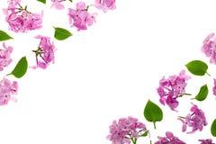 与淡紫色在与拷贝空间的白色背景隔绝的花和叶子的框架您的文本的 平的位置 顶视图 免版税库存图片